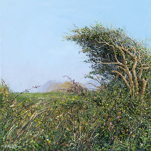 Print Cornish Hawthorn Hedge
