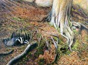 Print Beech Wood Badgers