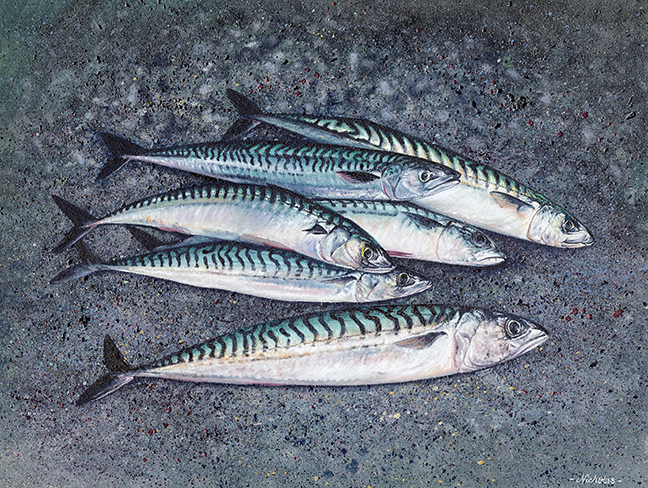 Print Mackerel Cornwall