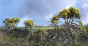 Cornish Gorse Hedge by Nicholas Smith artist