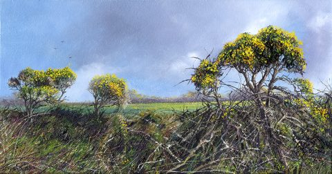 Cornish Gorse Hedge by Nicholas Smith artist