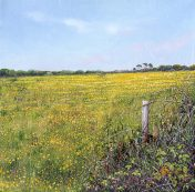 LE797 Yellow Buttercup Field - a detailed print by artist Nicholas Smith
