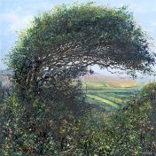 Summer Hedge - a detailed print by artist Nicholas Smith