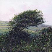 LE739 Tree Above the Valley - a detailed print of a Cornish landscape by artist Nicholas Smith