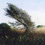LE740 Twisted by the Wind - a detailed print of a Cornish landscape by artist Nicholas Smith