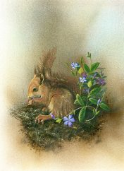 LE835 Red Squirrel - a detailed print of a red squirrel by artist Nicholas Smith