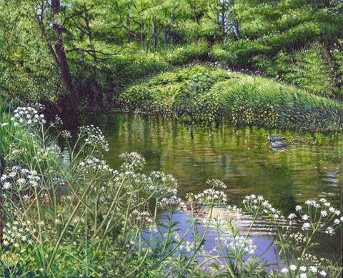 OE21 Mallards on the River - a detailed print by artist Nicholas Smith