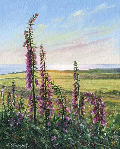 OE23 Foxgloves - a detailed print by artist Nicholas Smith