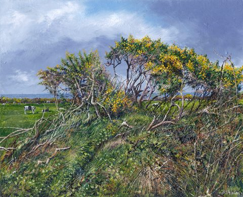 LE842 Spring Gorse - a detailed print of a hedge with gorse in flower by artist Nicholas Smith