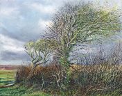 OE43 Bent by the South Westerlies - a detailed print by artist Nicholas Smith